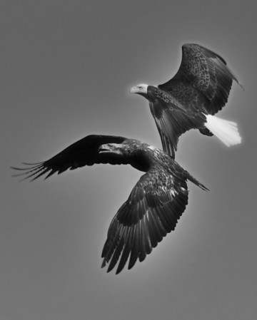 B&W Birds