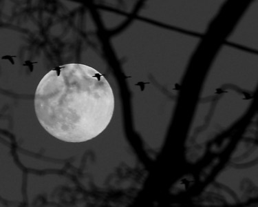 Moon with Geese in Formation