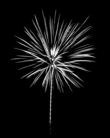 Fireworks As Flowers