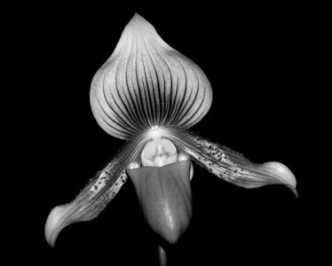 B&W Orchids