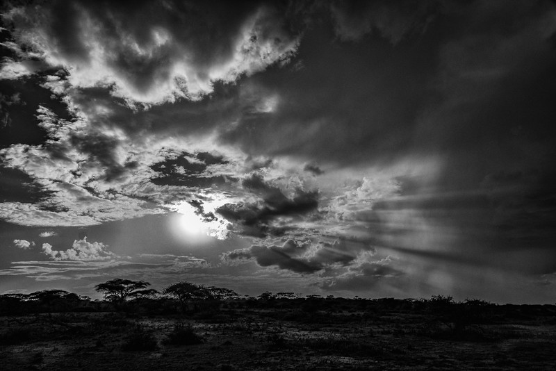 serengeti evening