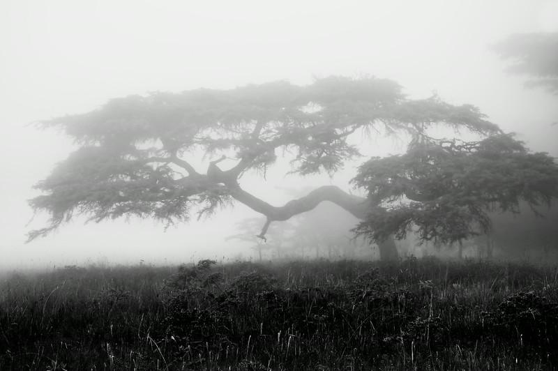 Makaroti Fog