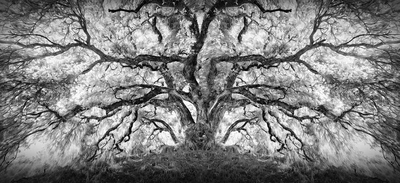 Mother Oak