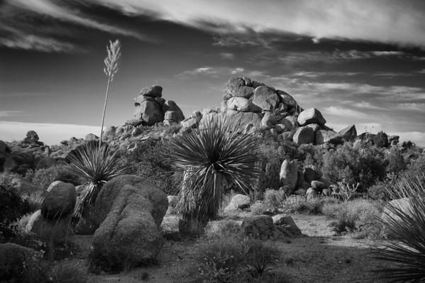 Yucca, AZ