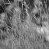 Grass 5406
