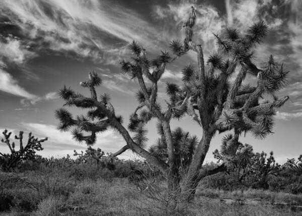 Joshua Tree, AZ 3022