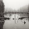Fog at Estivant Pines I, UP