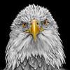 Eagle 6240 w59