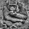 Monkey Business  0393  w29