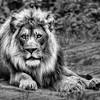 Lying King  0477  w28