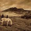 Wild Horse Canyon 9936 w44