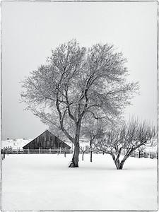 Snowstorm, Fort Cove, Utah.