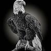 Eagle 5685
