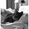 May 10, 2011  -  Cat Nap<br /> <br /> Snuggling into a Heavenly Bed for a serious cat nap...