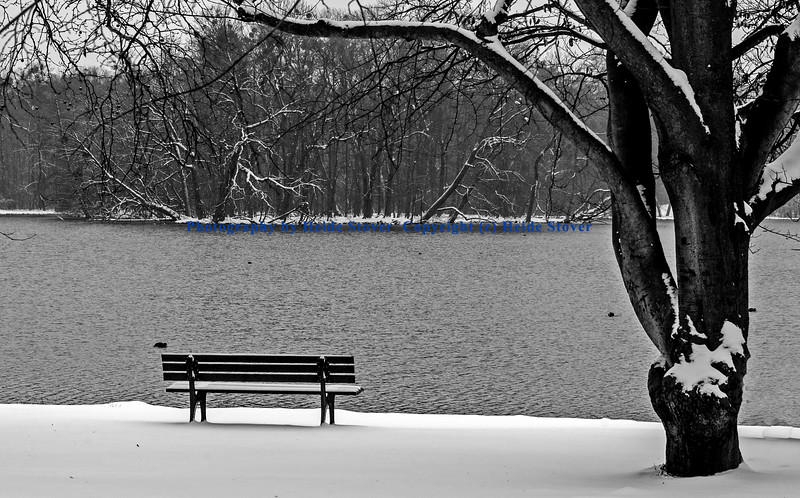 Lone Bench in the Snow