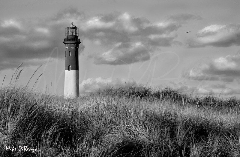 Sea Grass and Lighthouse  8873