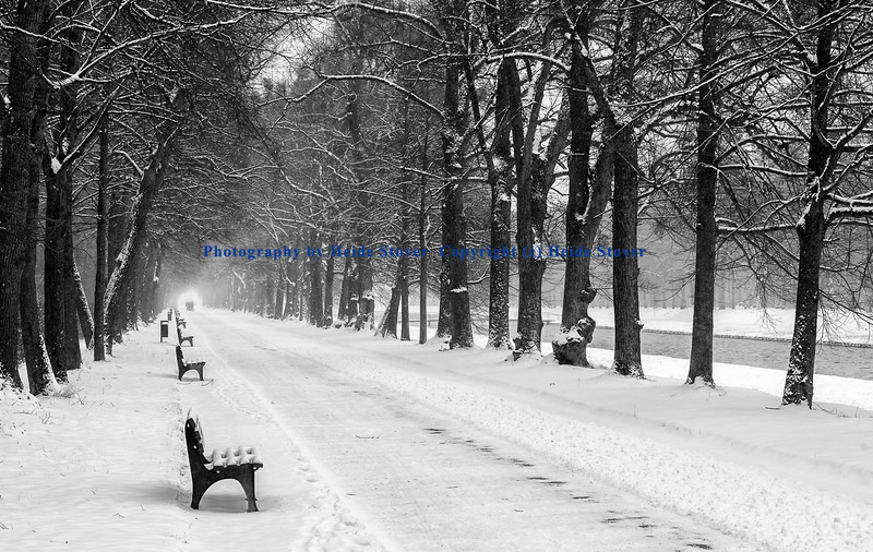 Bench Row in the Snow