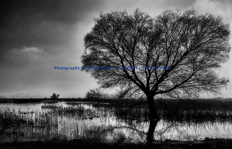 Tree in a Flooded Field