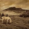 Wild Horse Canyon  9936 w43