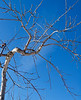 The Sky Crack'd<br /> New Hampshire, Dec 2009