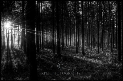 a fall forest setting at sunrise. I converted this to black and white and the sun rays seemed to pop. You could also see right through the trees to the lifting fog in the clearing behind... it was as if you could see through the setting.