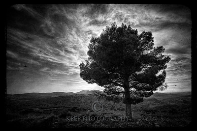 I stand alone! Nothing like a tree of solitude in a photograph... apply an antique looking layer on top, darken the corners, and voila... a black and white keeper.