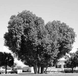 Hearts in Nature bw