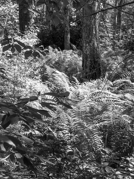 Ravenswood swamp