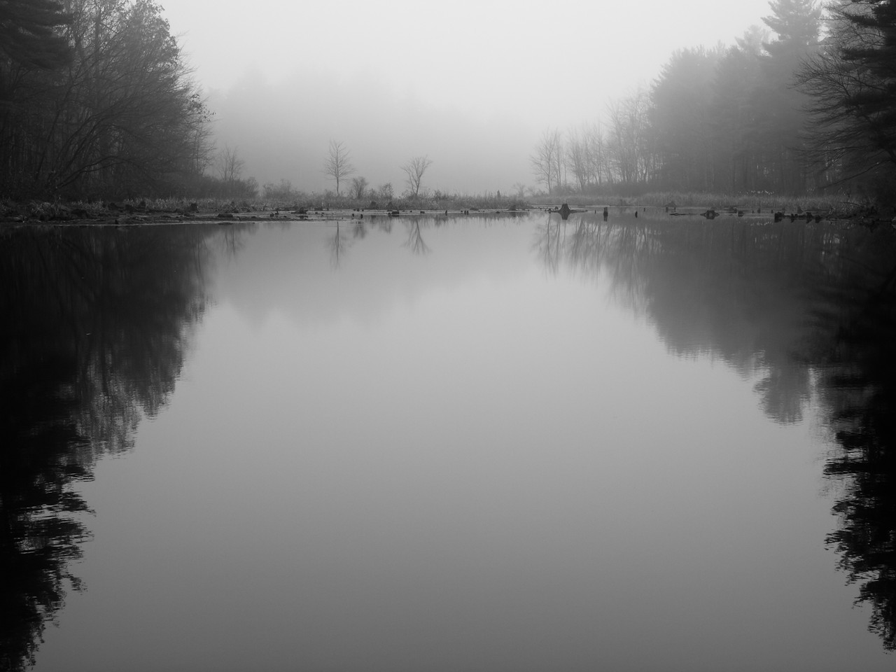 What a difference a month makes - this is Adams pond again on a perfect foggy morning.  I love how only the closest trees are visible.  When I came back from walking around the woods, the fog had thinned and the effect was much less dramatic.