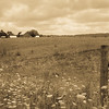 For once the field isn't full of soy or corn.  Stood up on a tall embankment to get the fence and the horizon lower in the shot and I think it works.  A sepia/antique finish seems to work, too.