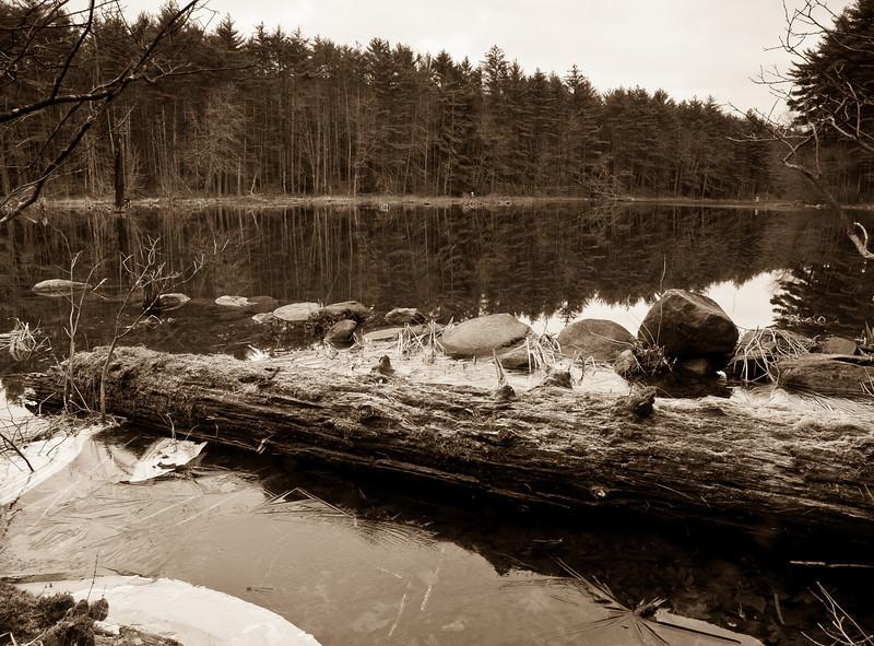 Spatterdock Pond @ Beaver Brook conservation area.