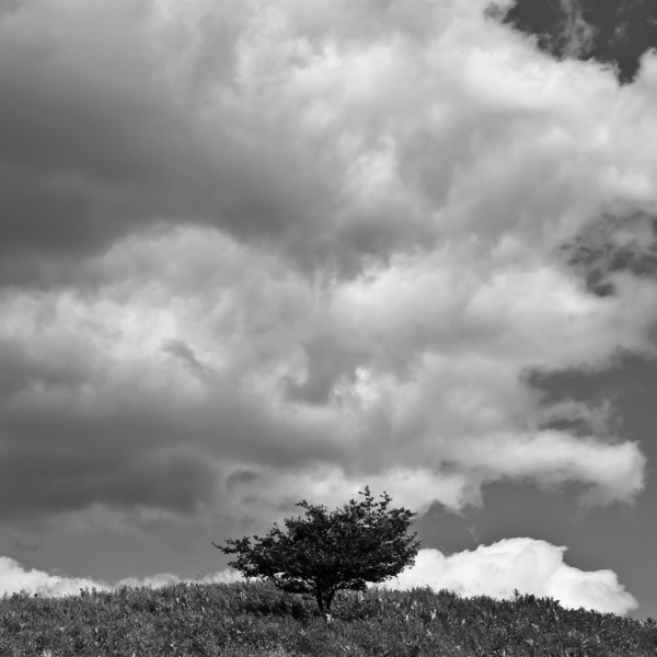 a sole tree on a hilltop at the Martin Bridge Park in Marshfield, VT.  It cried out for a B&W conversion.