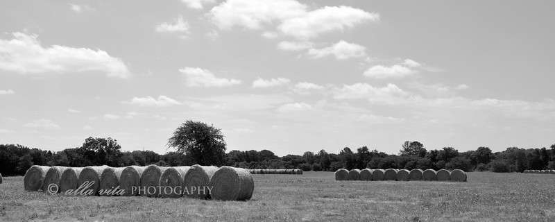 Hay Harvest panoramic B&W