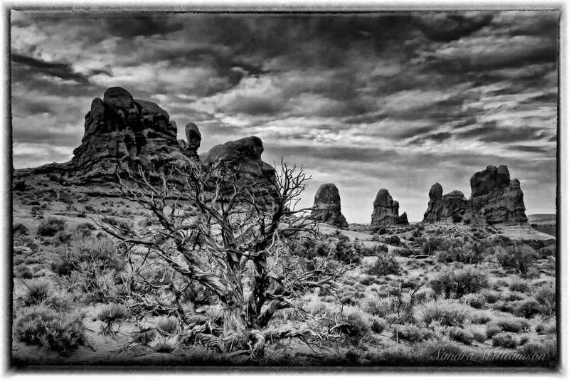 Arches National Park Another beautiful pile of rocks and ancient tree in black and white.  This is nice in color too.