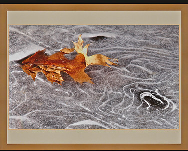 Leaf on the Ice