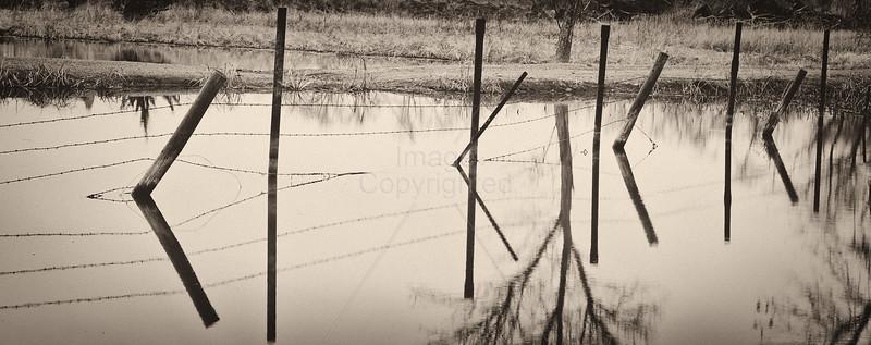 Fenceline Reflections