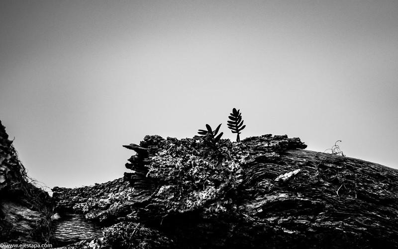 Tiny Tree Landscape