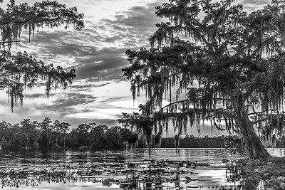Swamp Scene (B&W Edit)