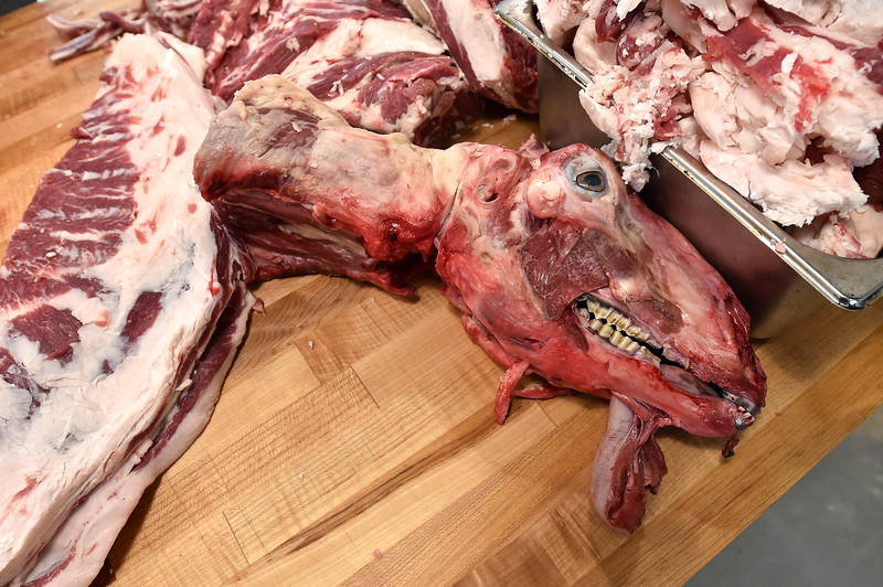"""Parts of a lamb lie on the butchering table at Blackbelly Butcher in Boulder. Nate Singer even extracted the brain of the lamb, which will be sold to a customer and used to tan hide.<br /> For more photos go to  <a href=""""http://www.dailycamera.com"""">http://www.dailycamera.com</a><br /> Autumn Parry/Staff Photographer<br /> April 21, 2016"""