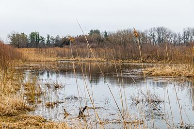 Fox Township Wildlife Area