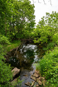 Twin Springs Natural Area