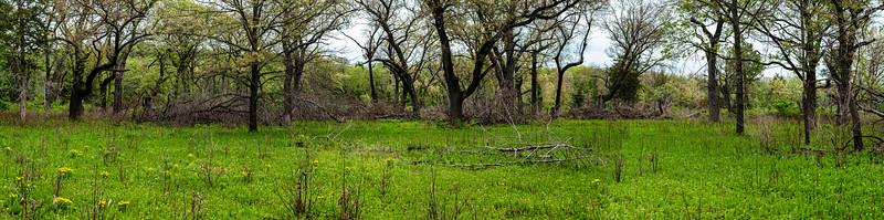 Cedar Bend Savanna