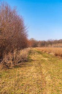 Wolf Creek Wetland