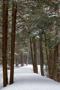 Fresh Snow on the path