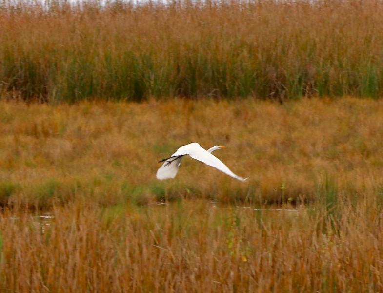 Blackwater National Wildlife Refuge Sept 26, 2020