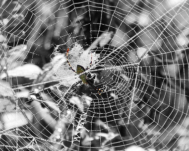 spider in its web-2