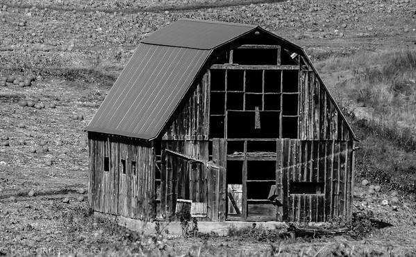 b-w old barn in pumpkin patch-2