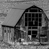 b-w old barn in pumpkin patch-2