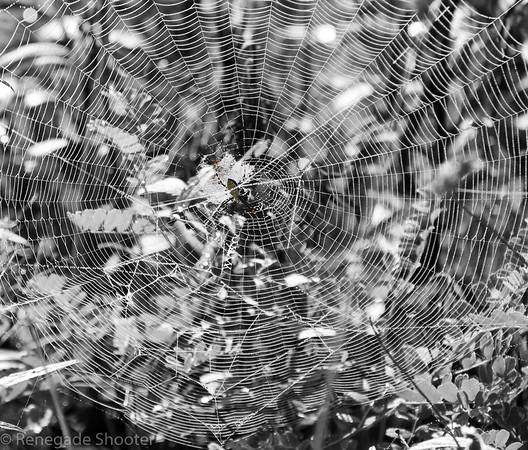 round spider web-2