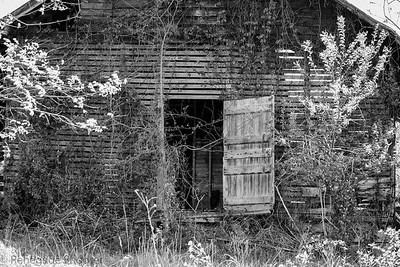 old barn side door b-w